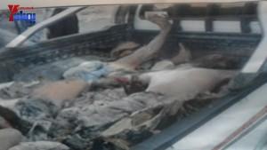 الالاف يشيعون 6 من شهداء مجزرة الضبر بعمران التي ارتكبتها قوات القشيبي بحق مسيرة سلمية (21)